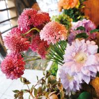 fleur_001