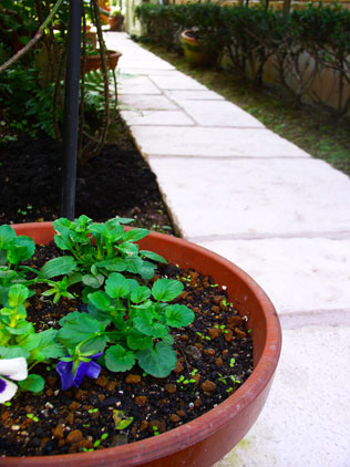planter-with-gironde